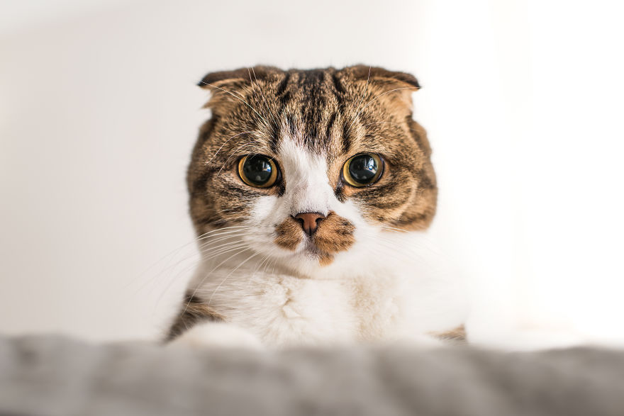 emotions_portrayed_by_cats_06