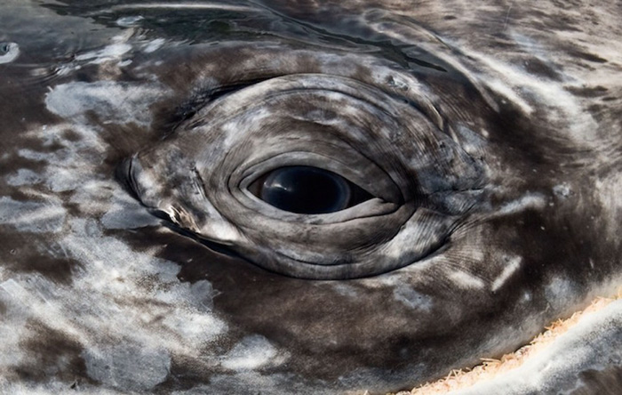 morskie-zhyvotnye-28-5