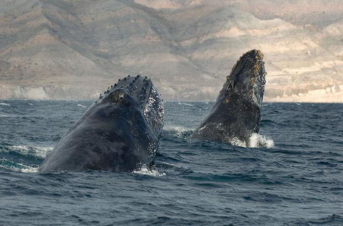 morskie-zhyvotnye-28-9