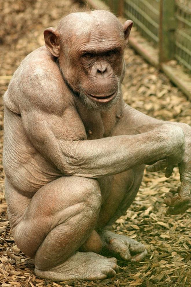 muscul-animal-7