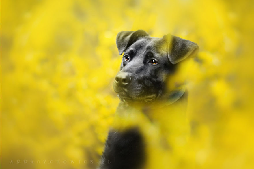 photograph_the_dog_emotion_that_you_see_in_their_eyes_10