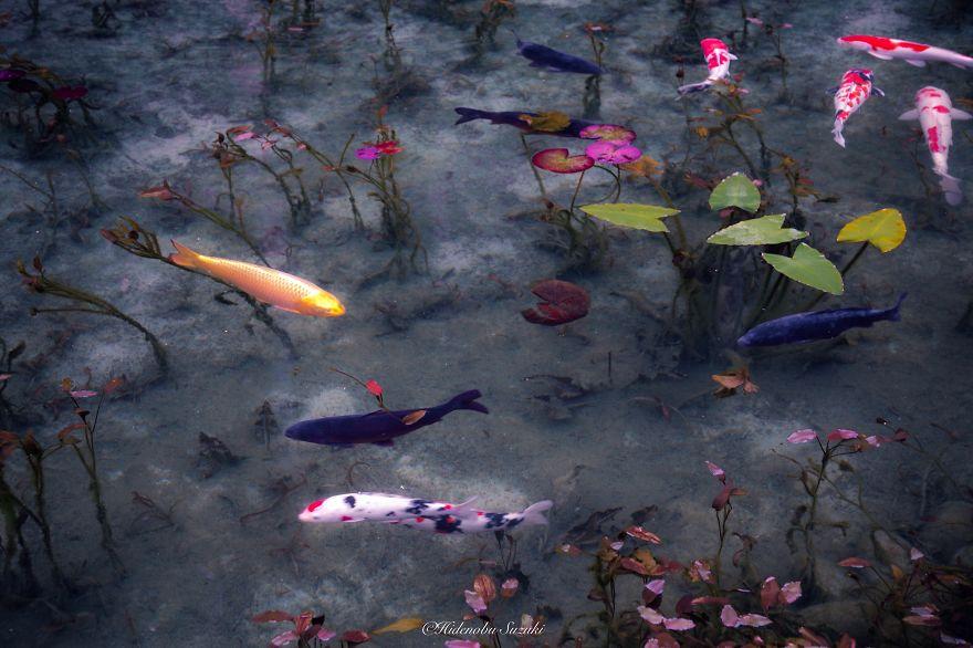 japanese_pond_08