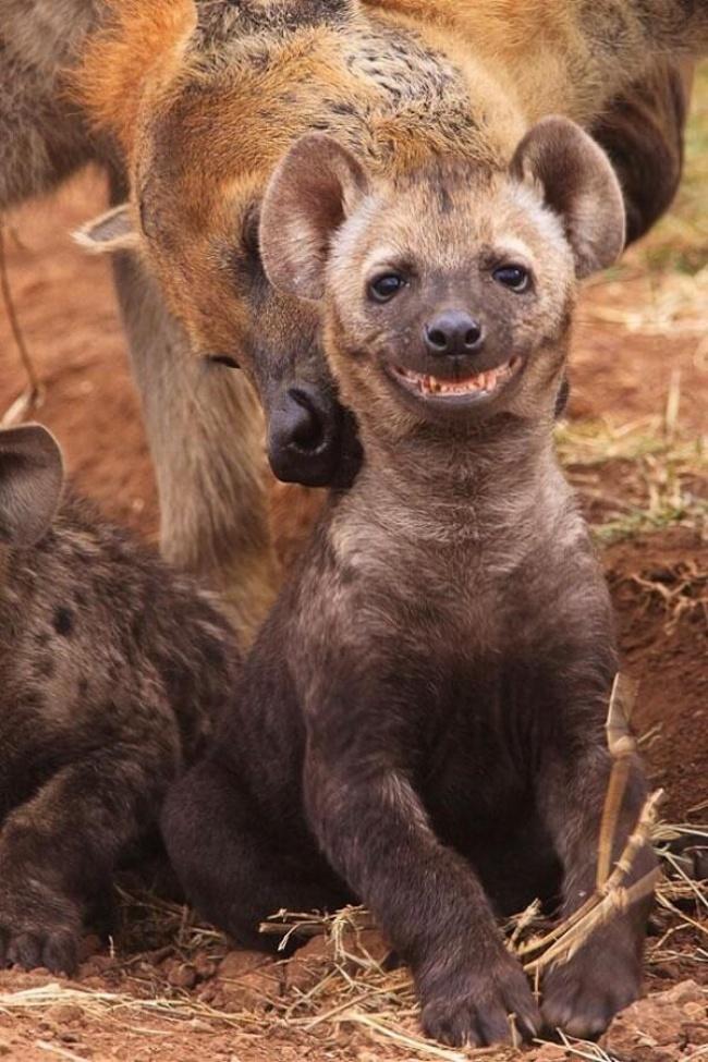 12077615-1461957753_smile-animals-15-650-3bec3c9d17-1469097942