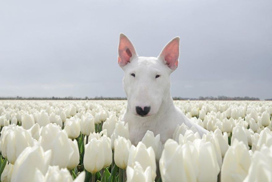 Claire-Tulips-0002-57b7951066e8a__880