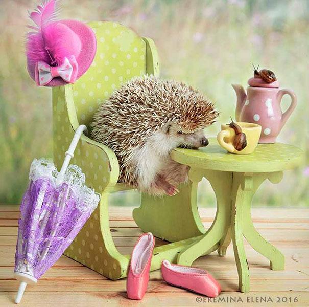 hedgehogs-photography-elena-eremina-28-57b187d99acc3__605
