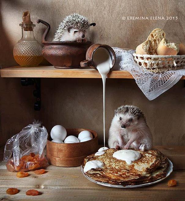 hedgehogs-photography-elena-eremina-50-57b1880a7b264__605