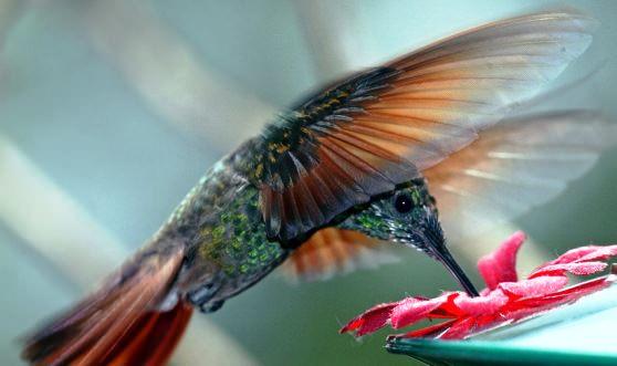 78-fakty-o-kolibri-8