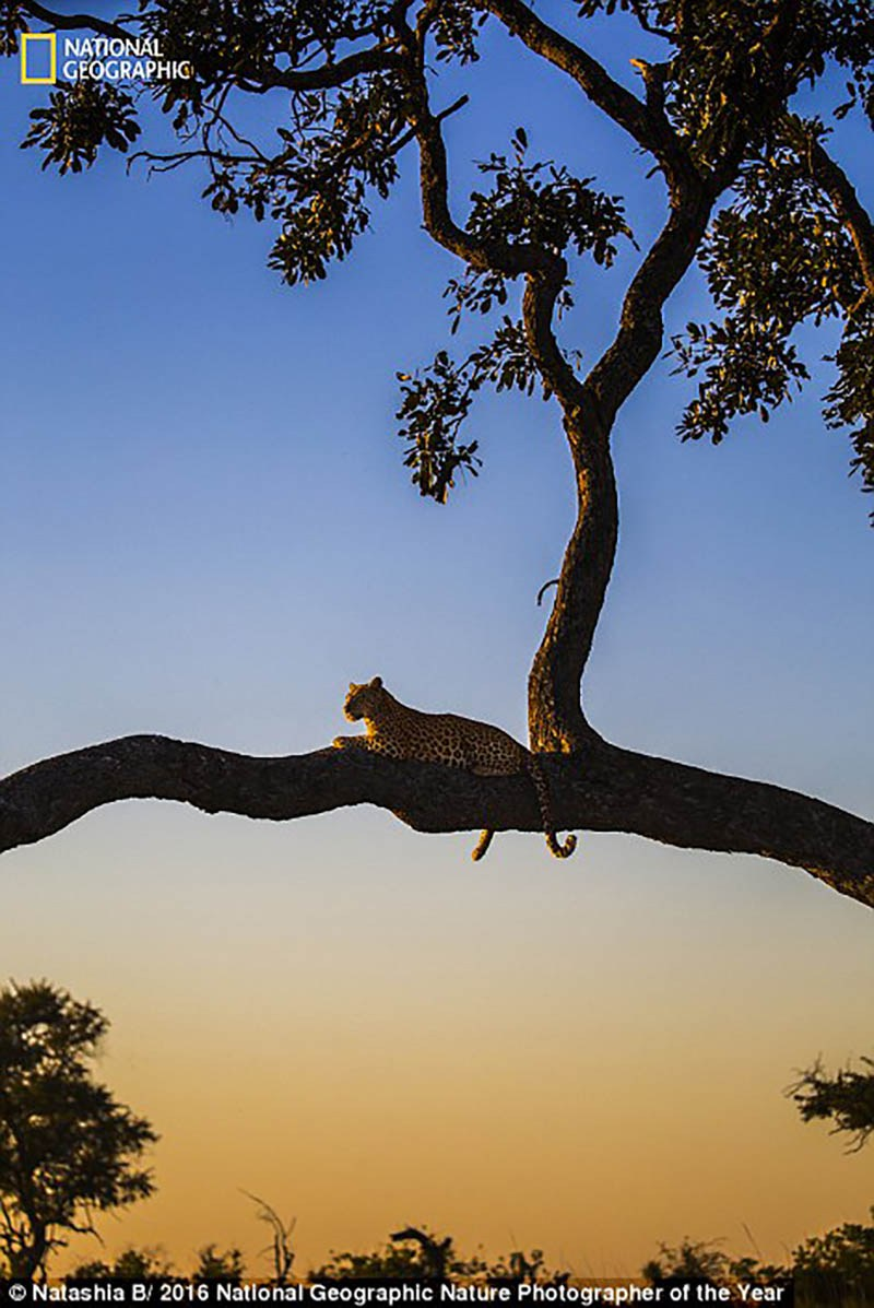 national-geographic-nature-photographer-of-the-year-2016-vinegret-1