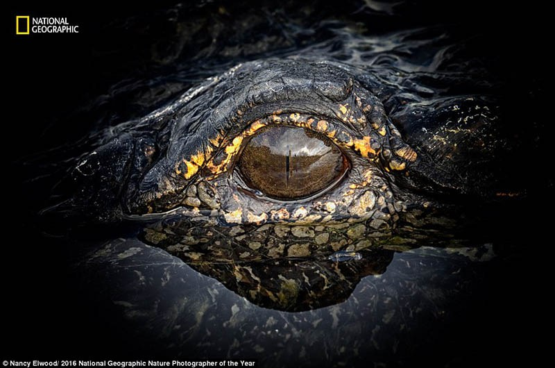 national-geographic-nature-photographer-of-the-year-2016-vinegret-10