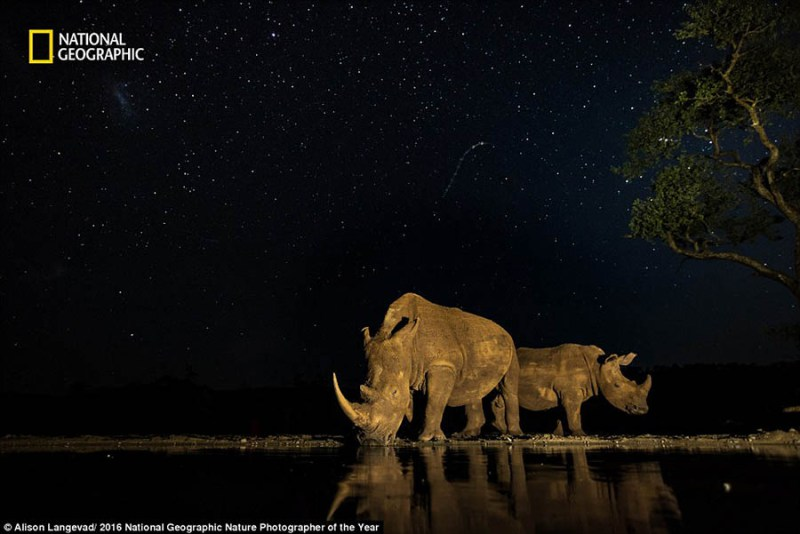 national-geographic-nature-photographer-of-the-year-2016-vinegret-3