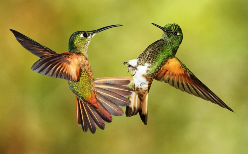 photos-of-hummingbird-01