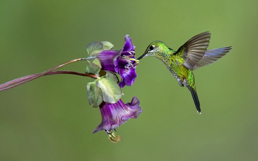photos-of-hummingbird-03