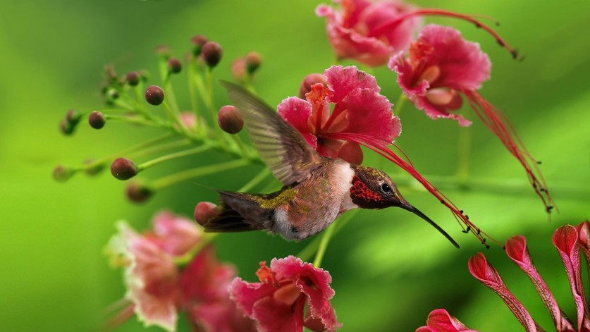 photos-of-hummingbird-08