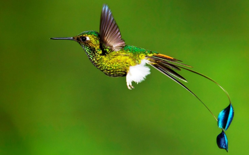 photos-of-hummingbird-09