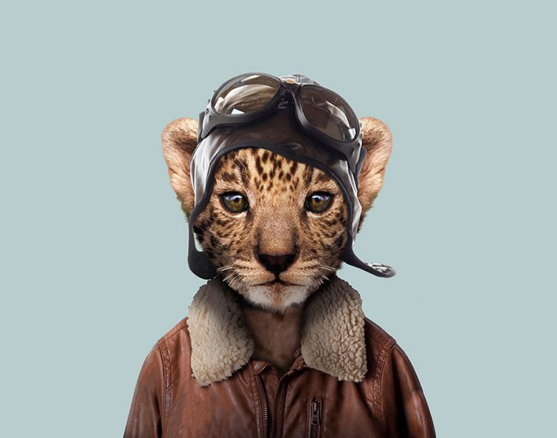 animals-dressed-like-humans-zoo-porraits-yago-partal-vinegret-10