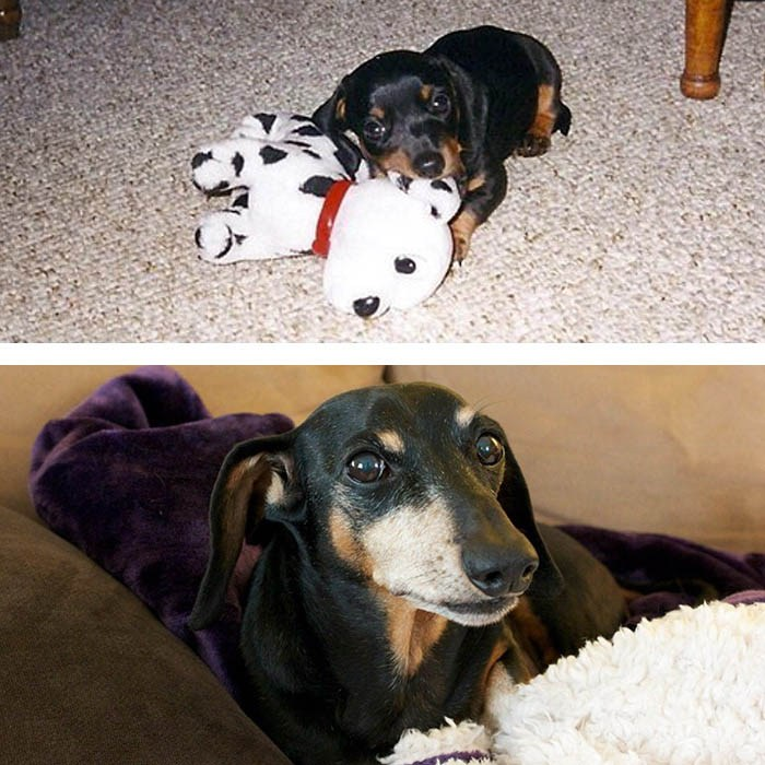 before-after-pets-growing-old-first-last-photos-vinegret-10