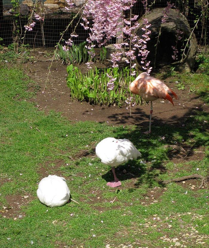ducks-pretend-flamingos-vinegret-7