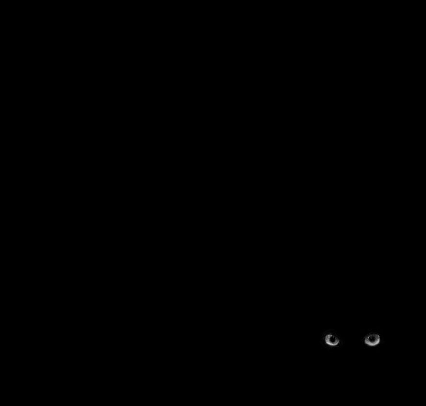 mysterious-cat-101-57c0361da3569__880