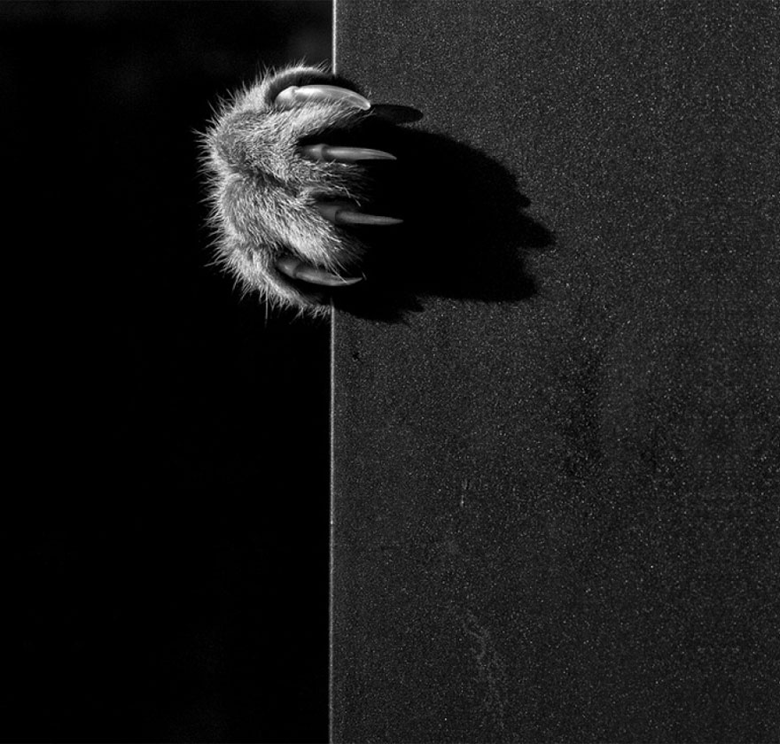 mysterious-cat-photography-black-and-white-15-57bffafc15b61__880