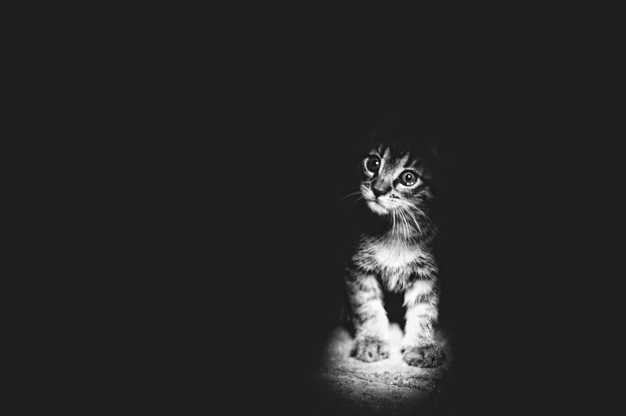 mysterious-cat-photography-black-and-white-41-57bffb3592e68__880