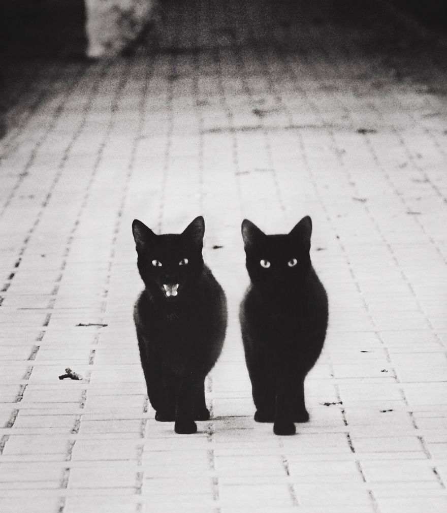 mysterious-cat-photography-black-and-white-56-57c03b1b4b26c__880