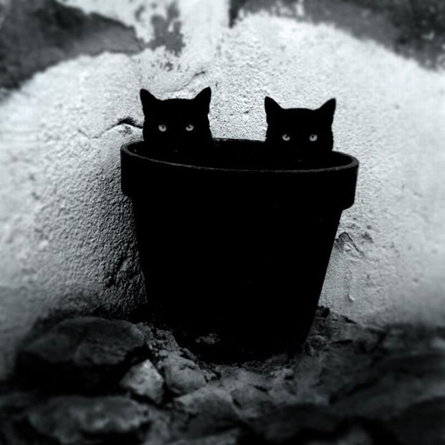 mysterious-cat-photography-black-and-white-67-57c582ace3860__880