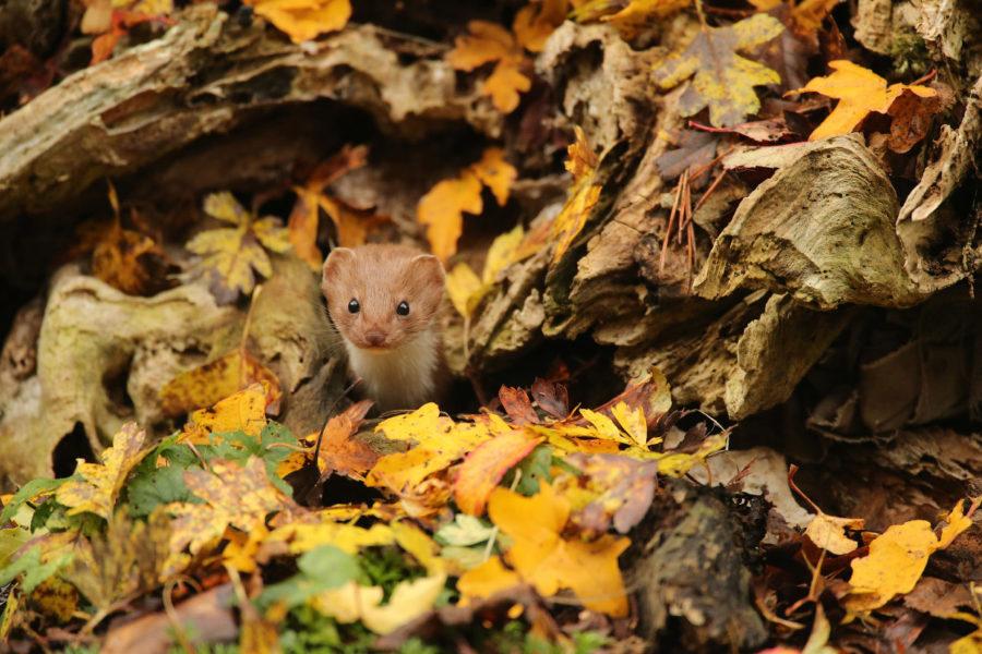 pobediteli-konkursa-fotografij-dikoj-prirody-wildlife-photographer-of-the-year-2016-10