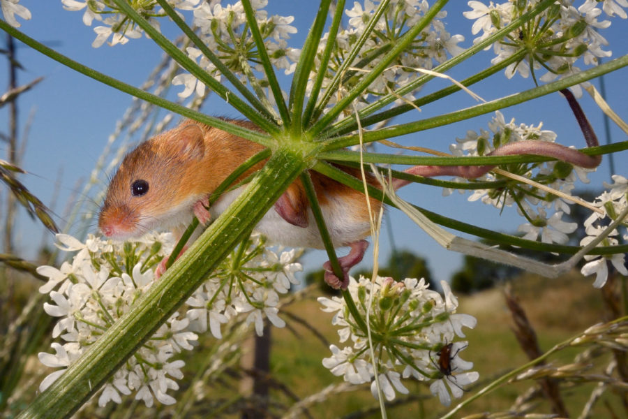 pobediteli-konkursa-fotografij-dikoj-prirody-wildlife-photographer-of-the-year-2016-13