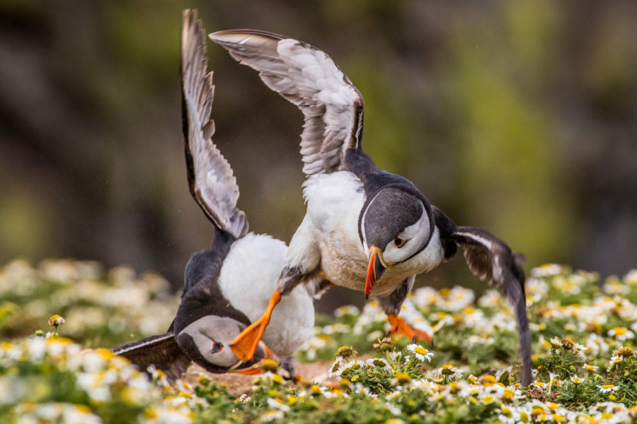 pobediteli-konkursa-fotografij-dikoj-prirody-wildlife-photographer-of-the-year-2016-16