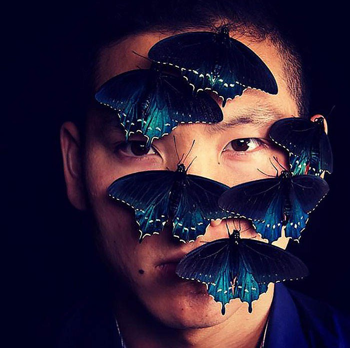 rare-blue-swallowtail-pipevine-butterfly-repopulation-tim-wong-vinegret-2
