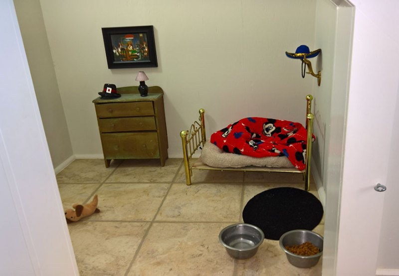 room-for-chihuahua-dog-vinegret-1