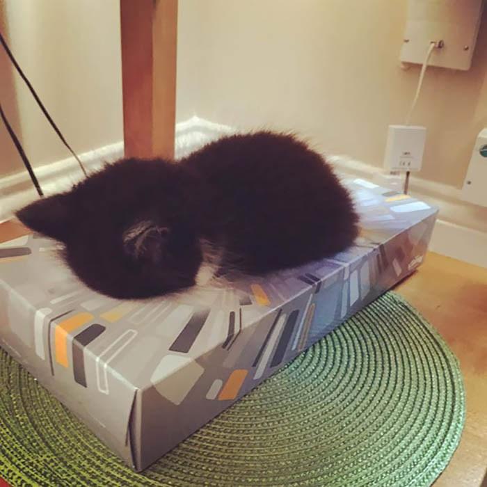 sleeping-cats-vinegret-12