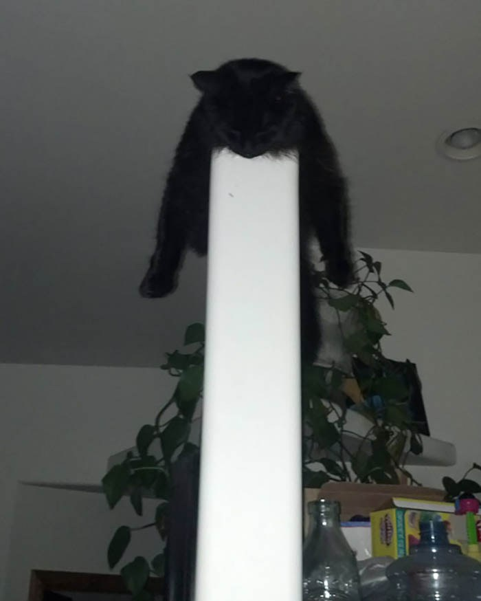 sleeping-cats-vinegret-14