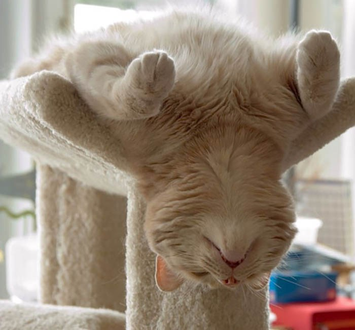 sleeping-cats-vinegret-17