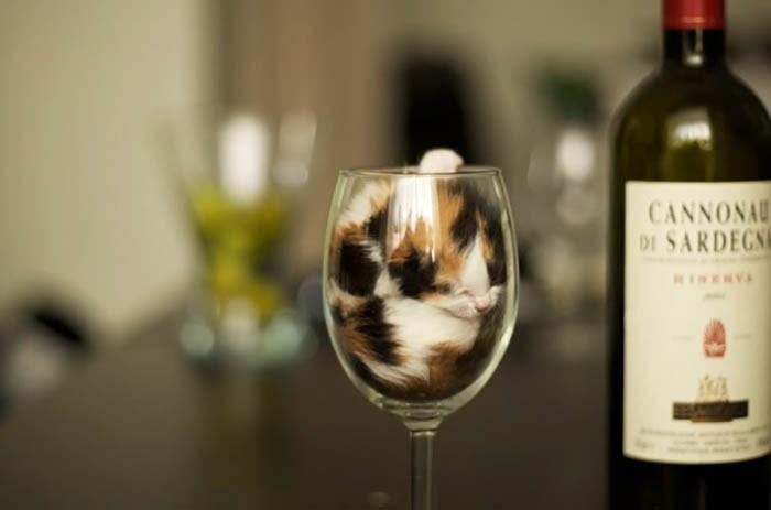 sleeping-cats-vinegret-19