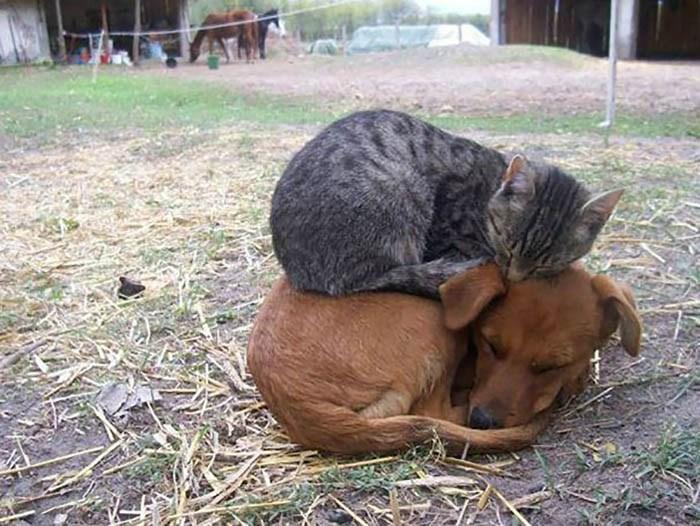 sleeping-cats-vinegret-23