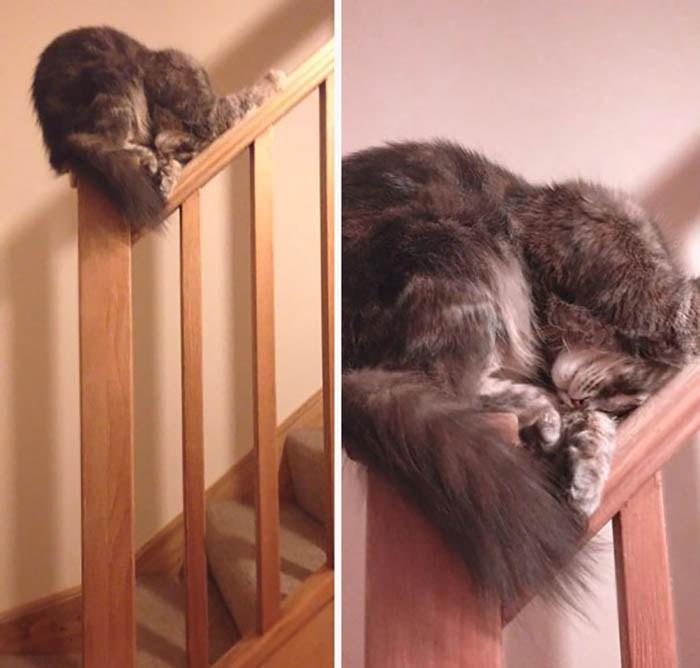 sleeping-cats-vinegret-25