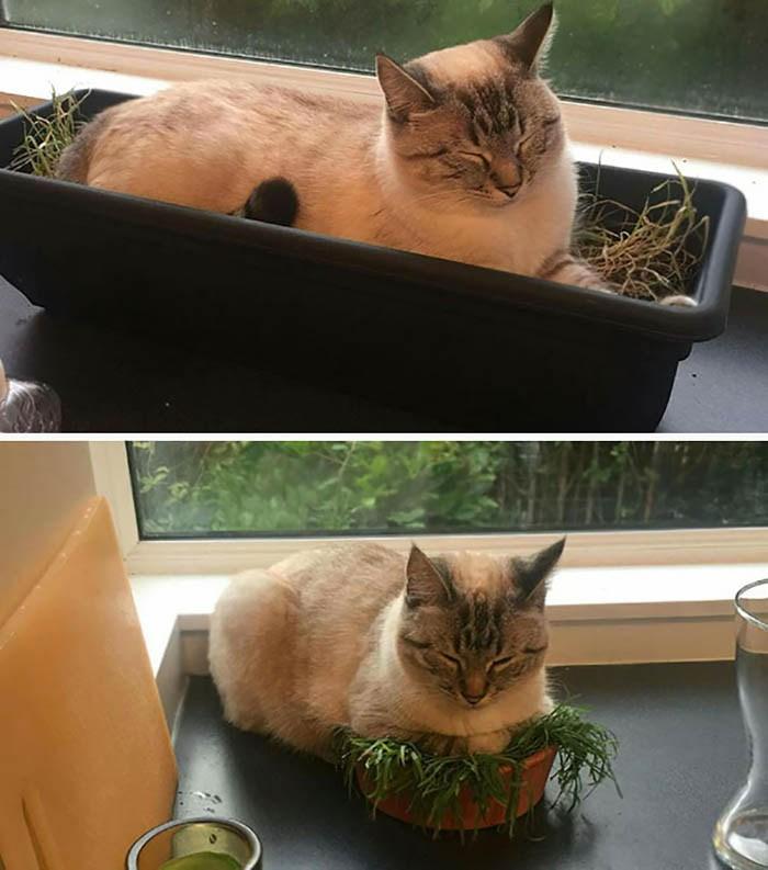 sleeping-cats-vinegret-26
