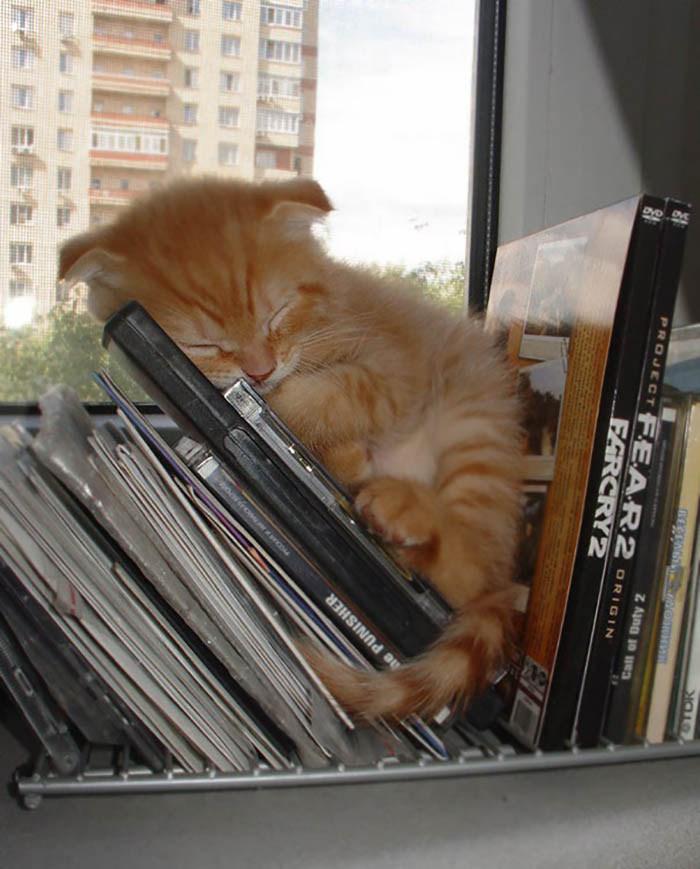 sleeping-cats-vinegret-4