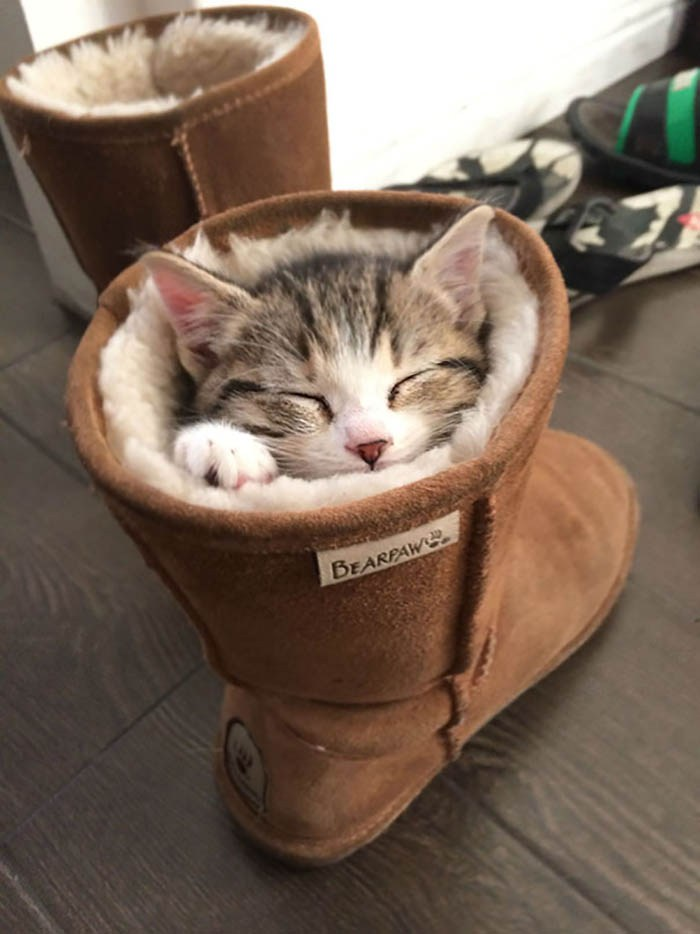 sleeping-cats-vinegret-5