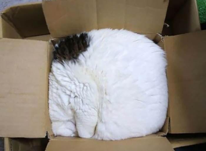 sleeping-cats-vinegret-6