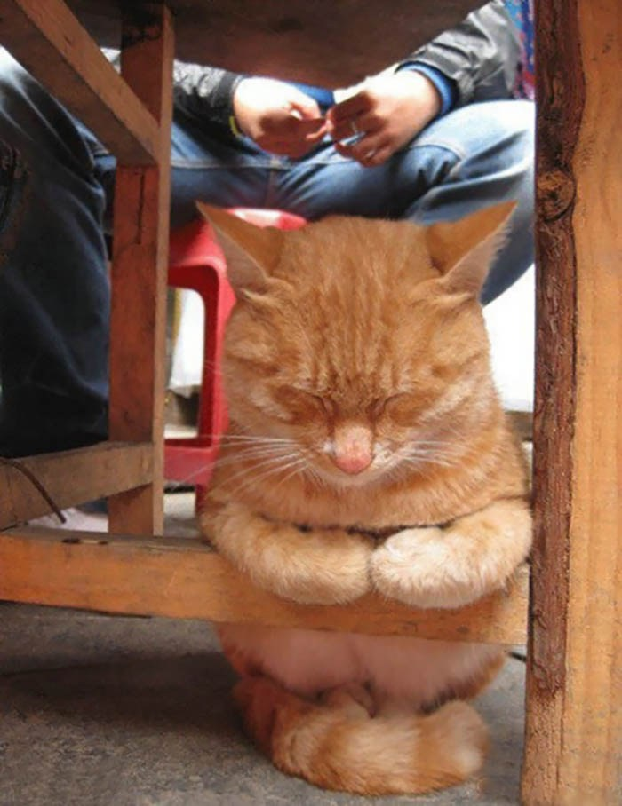 sleeping-cats-vinegret-9