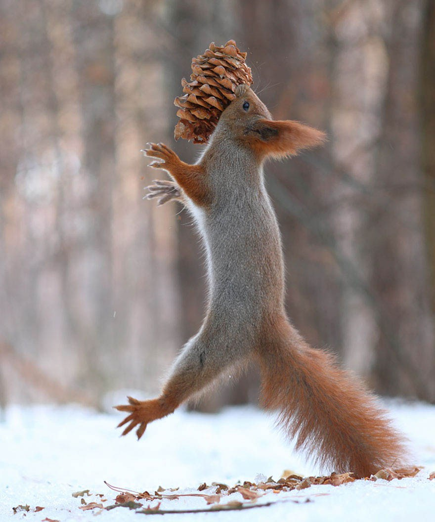 squirrel-photography-russia-vadim-trunov-vinegret-12