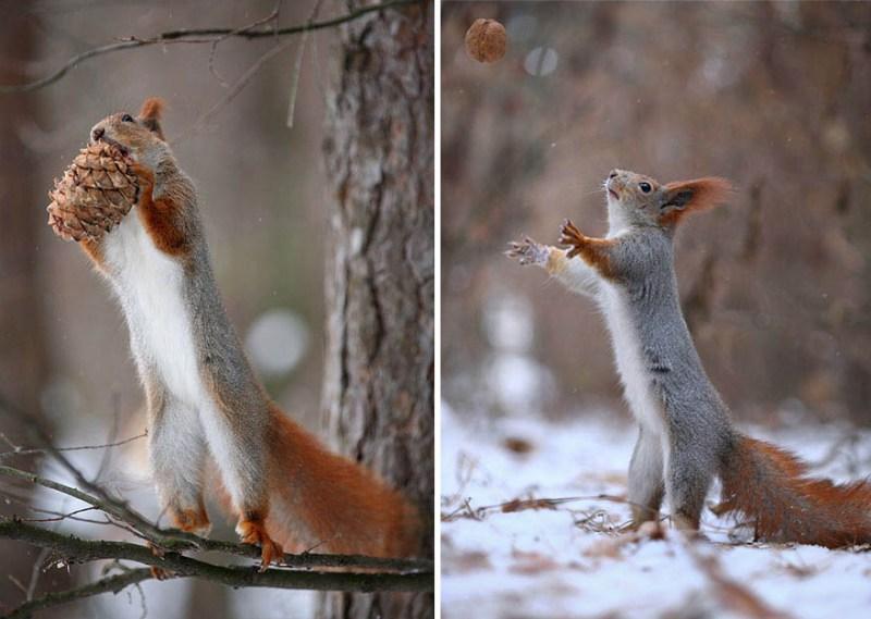 squirrel-photography-russia-vadim-trunov-vinegret-13