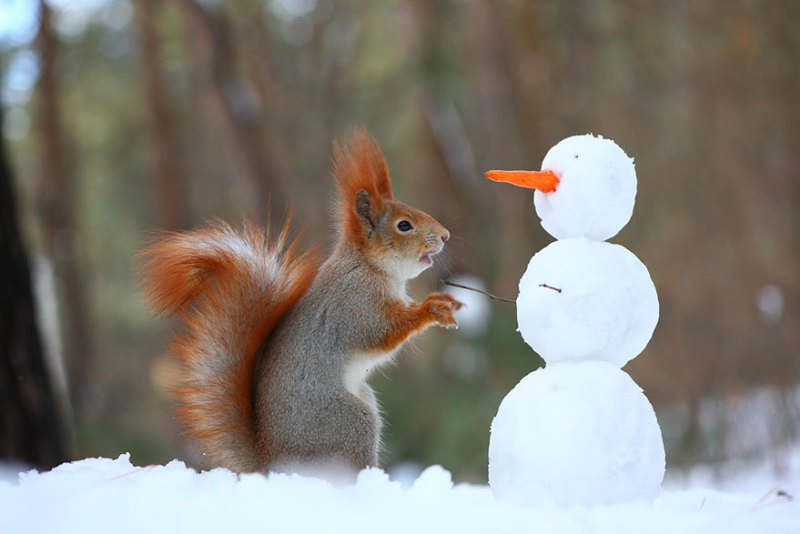 squirrel-photography-russia-vadim-trunov-vinegret-2