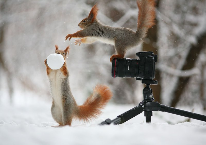 squirrel-photography-russia-vadim-trunov-vinegret-5