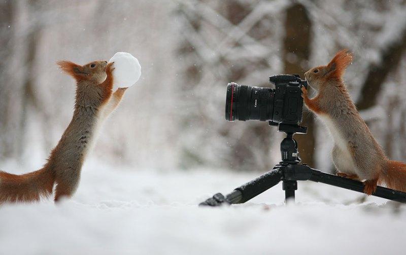 squirrel-photography-russia-vadim-trunov-vinegret-6
