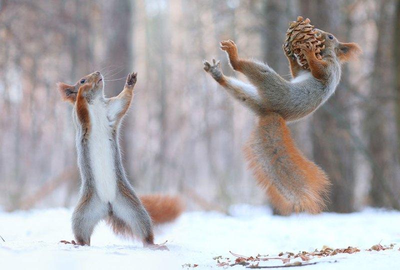 squirrel-photography-russia-vadim-trunov-vinegret-7