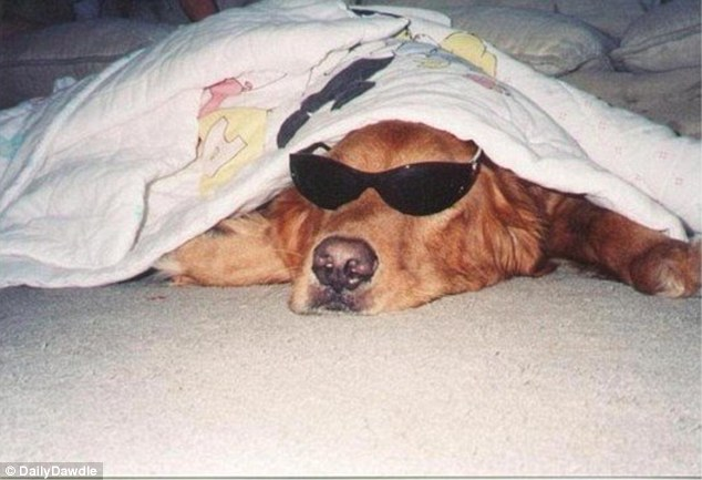 394f04dc00000578-3833174-one_hungover_hound_couldn_t_even_be_bothered_to_take_off_his_sun-m-30_1476308706753
