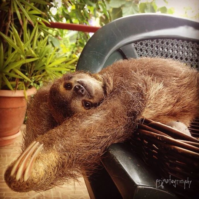 cute-sloths-vinegret-1